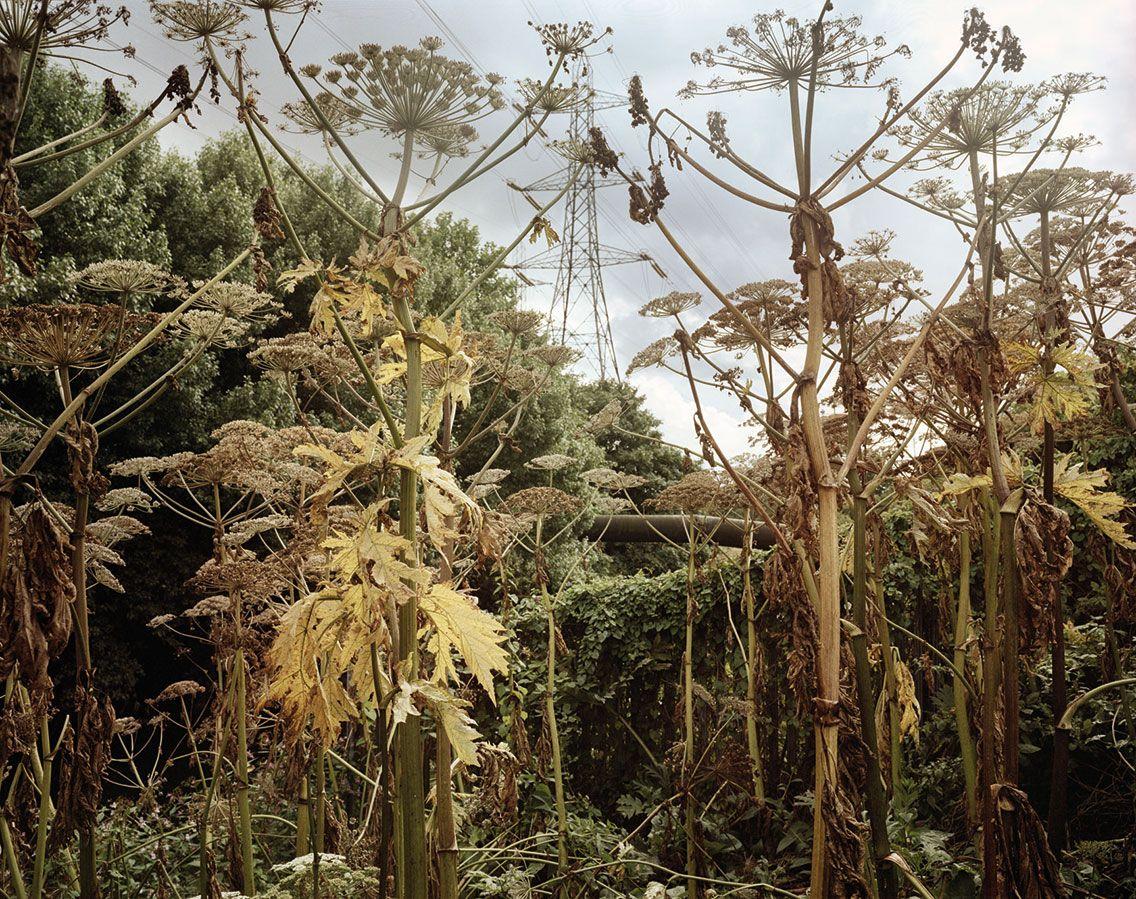 Tall plants, Lower Lea Valley, 2005