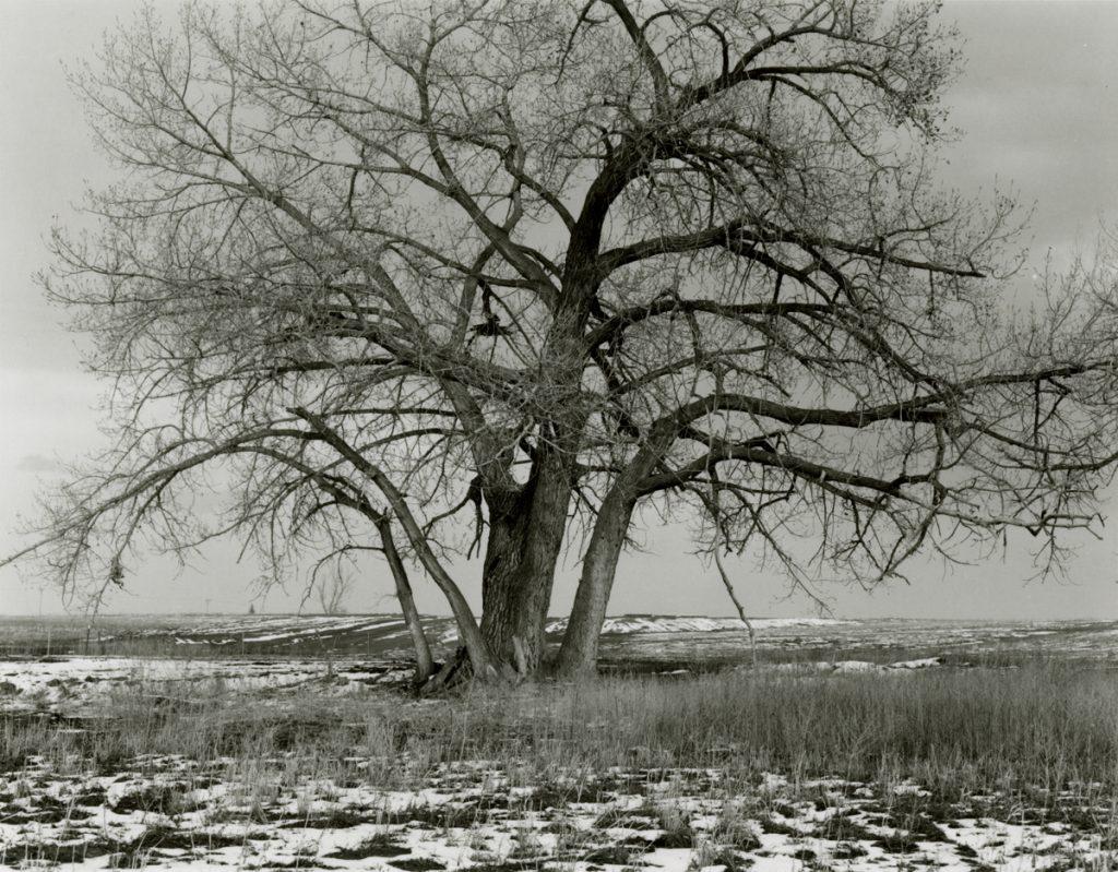 Cottonwood, Longmont, Colorado, 1973-75