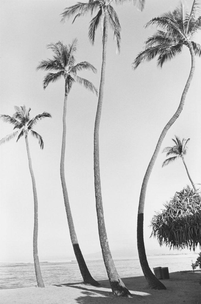 Waikiki No 01, 1979