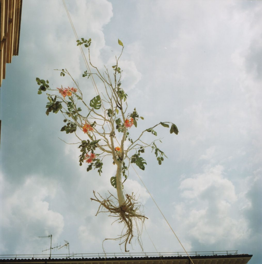 Brisighella, 2005